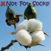 cotton boll: unsuitable for socks